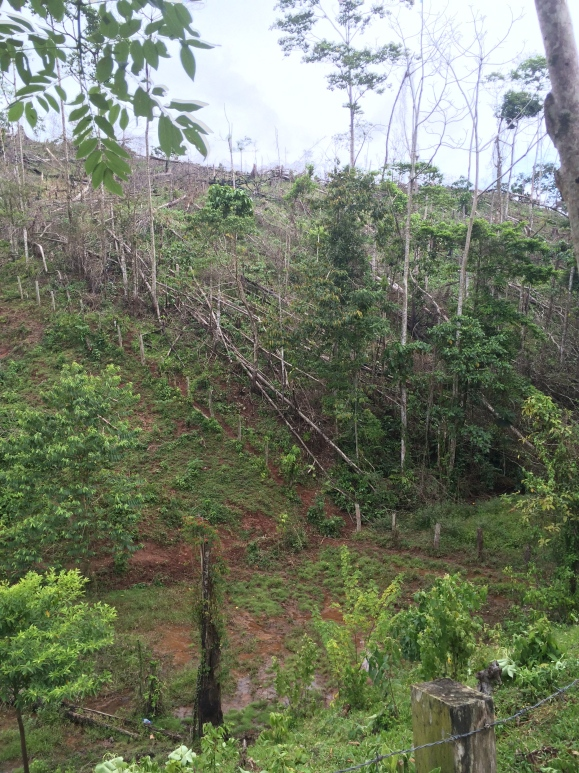 Illegal logging in process